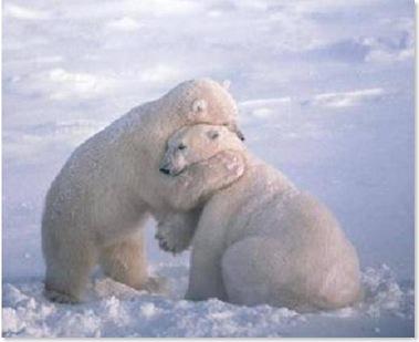 te perdono osos