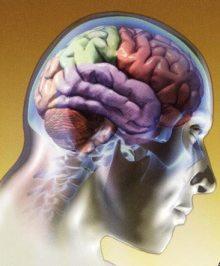 1-cerebro