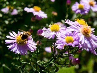 1-flores-bejas