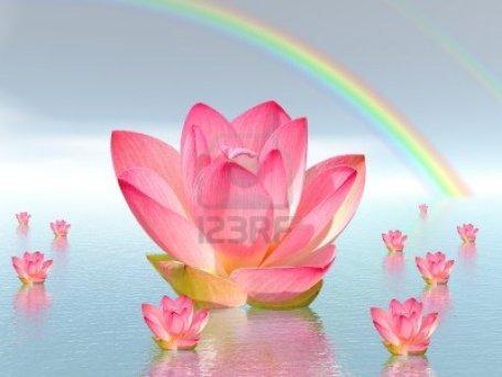 11266709-lirio-rosa-flores-en-agua-y-bajo-del-arco-iris-por-buen-tiempo