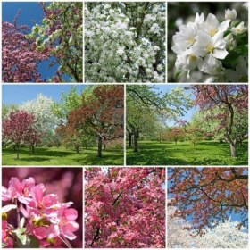 1primavera-de-un-hermoso-jardin-