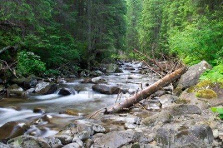 arroyo-claro-en-un-bosque