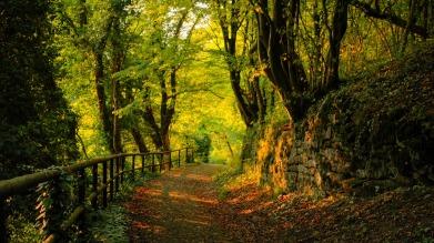 Autumn_1920x1080