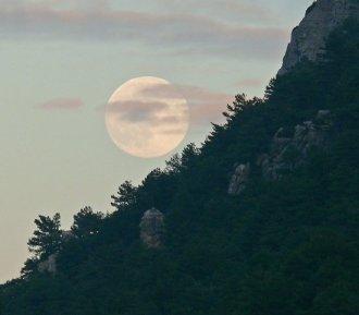 14luna-llena-en-el-bosque-