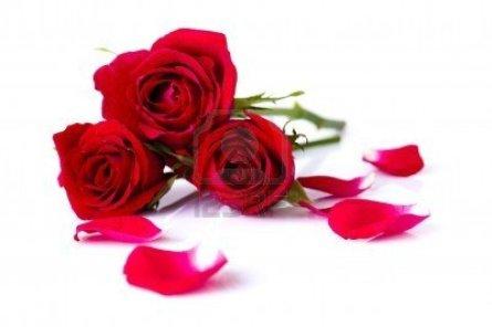 rosas-y-petalos-