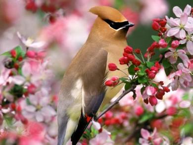 ave_de_primavera