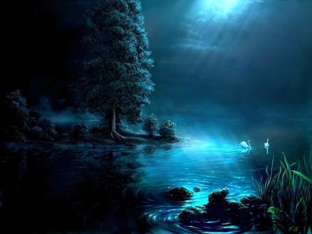 dos cisnes durante la noche en un un lago iluminado por la luz de la luna