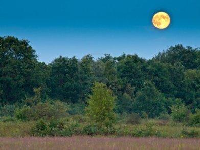 -luna-llena-bosque