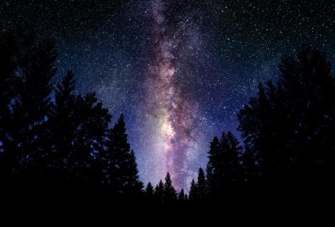 noche bosque