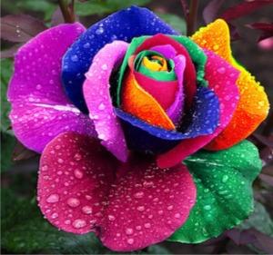 semillas-de-rosas-exoticas-arcoiris-negras-verdes-etcmdn-3475-MLM4193013025_042013-F