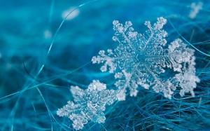 Los-Copos-de-Nieve-Macro_Fondos-de-Pantalla-Macros-Zoom