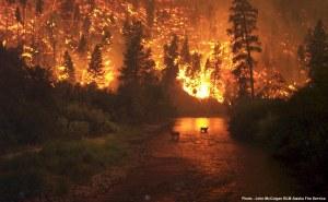 o_Incendios%20forestales