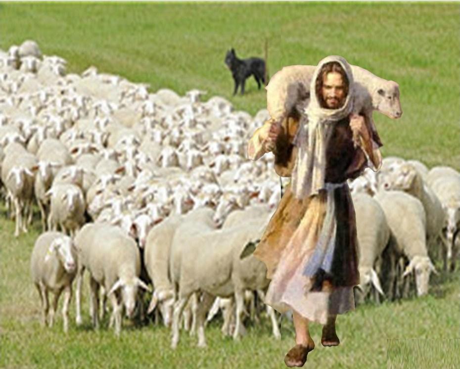 21jesc3bas-y-ovejas