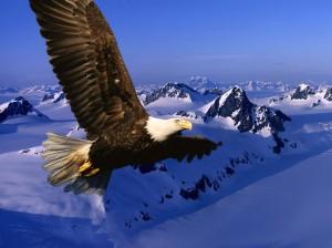 Aguila_Volando-1024x768-527181