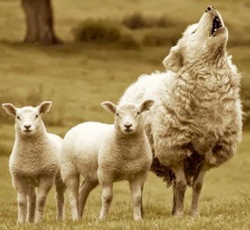 2lobo disfrazado de oveja