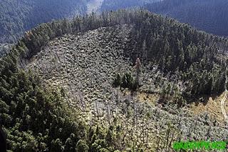 impactos-de-la-tala-ilegal-sobre-el-gran-bosque-de-agua-en-zempoala-estado-de-mexico-foto-cortesia-greenpeace-mexico