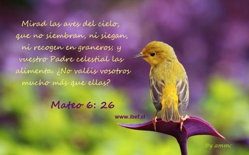 Mateo_6_26