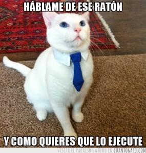 CG_16099_el_gato_asesino_a_sueldo