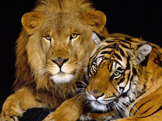 Big-Cats-wild-animals-3633223-1600-1200