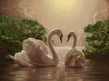 Cisnes%20Enamorados-840231_800
