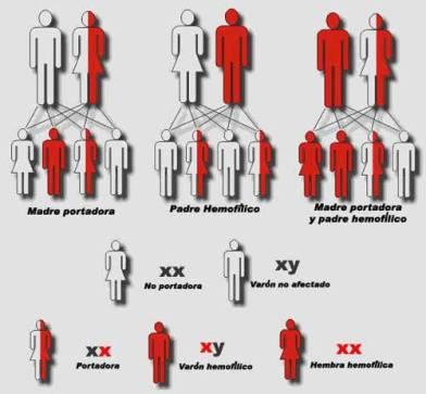 reproduccion-asistida-hemofilia