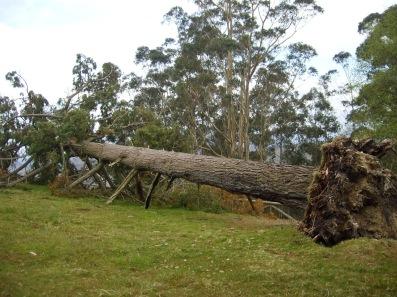 árbol caído