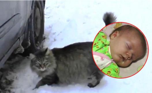 gato salva a bebé abandonado