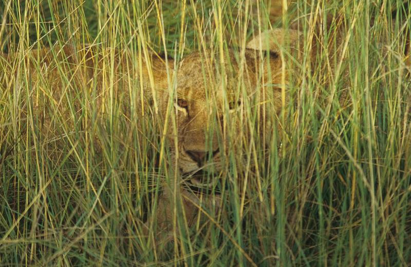 leon cazando