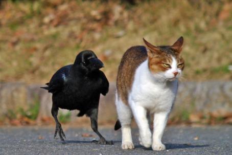 00cuervo y gato natural- malacompañíapain