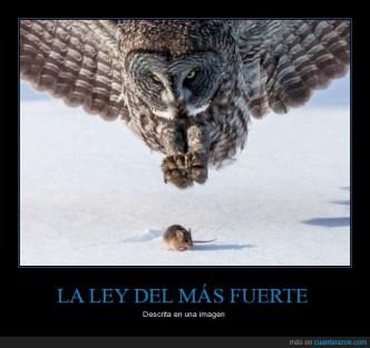 CR_940854_la_ley_del_mas_fuerte