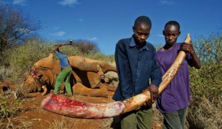 00kenyan-ivory-poaching-620