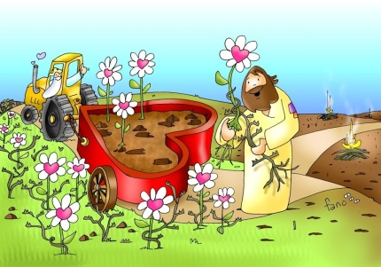000AMOR semillas-fano