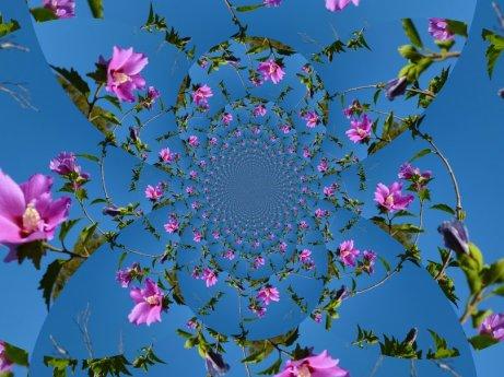 00__heavenly-hibiscus_p