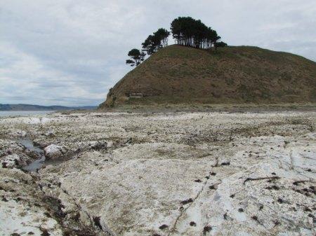 c006-Caleta-Yani-ex-meeresboden-weisse-schicht-m-toten-algen