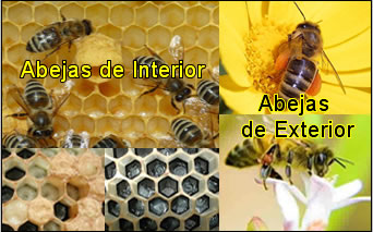 abejas enel panal