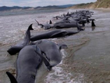 delfines-muertos-peru11