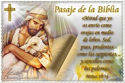 evang ovejas lobos Biblia-Mt-10-16 (1)