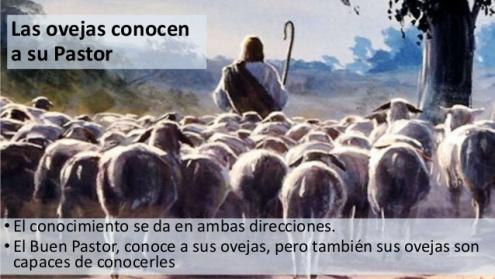 ovejas conozcamos-a-jess-el-buen-pastor-