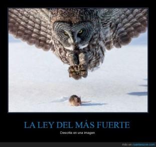 00_la_ley_del_mas_fuerte