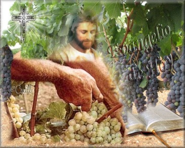 0evang frutos viñedo