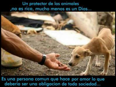amor mascotas maltratadas