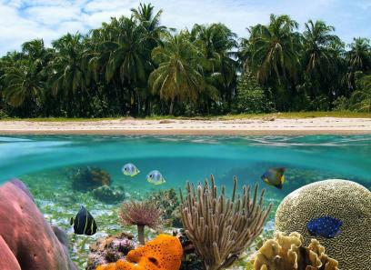 vida marina y playa