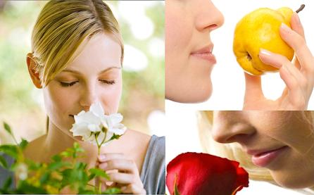 aromas-sagrados-oler-sentido-olfato-fragancias-elixires