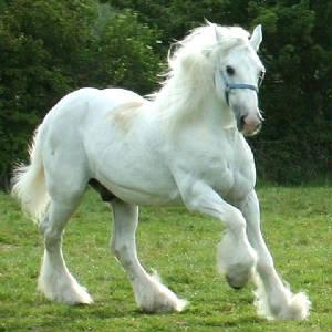 nube caballo