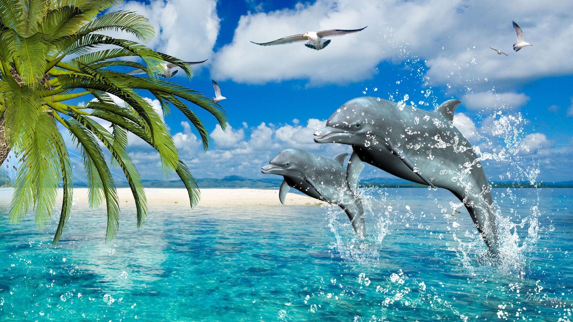 delfines-danza