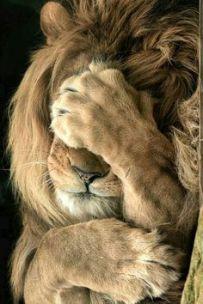 leon-lo-siento soberbia
